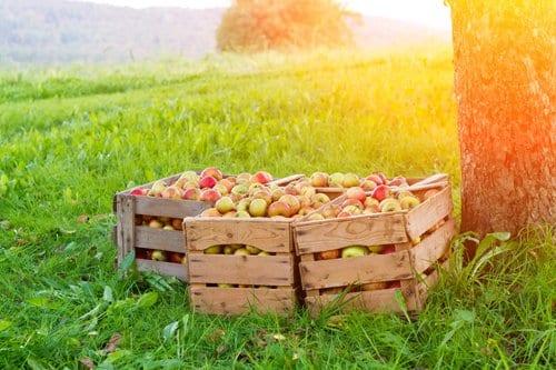 Landmaschinen und Geräte für den Obstanbau