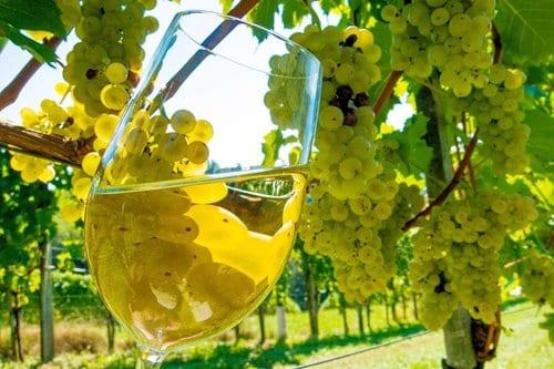 Landmaschinen und Geräte für den Weinanbau