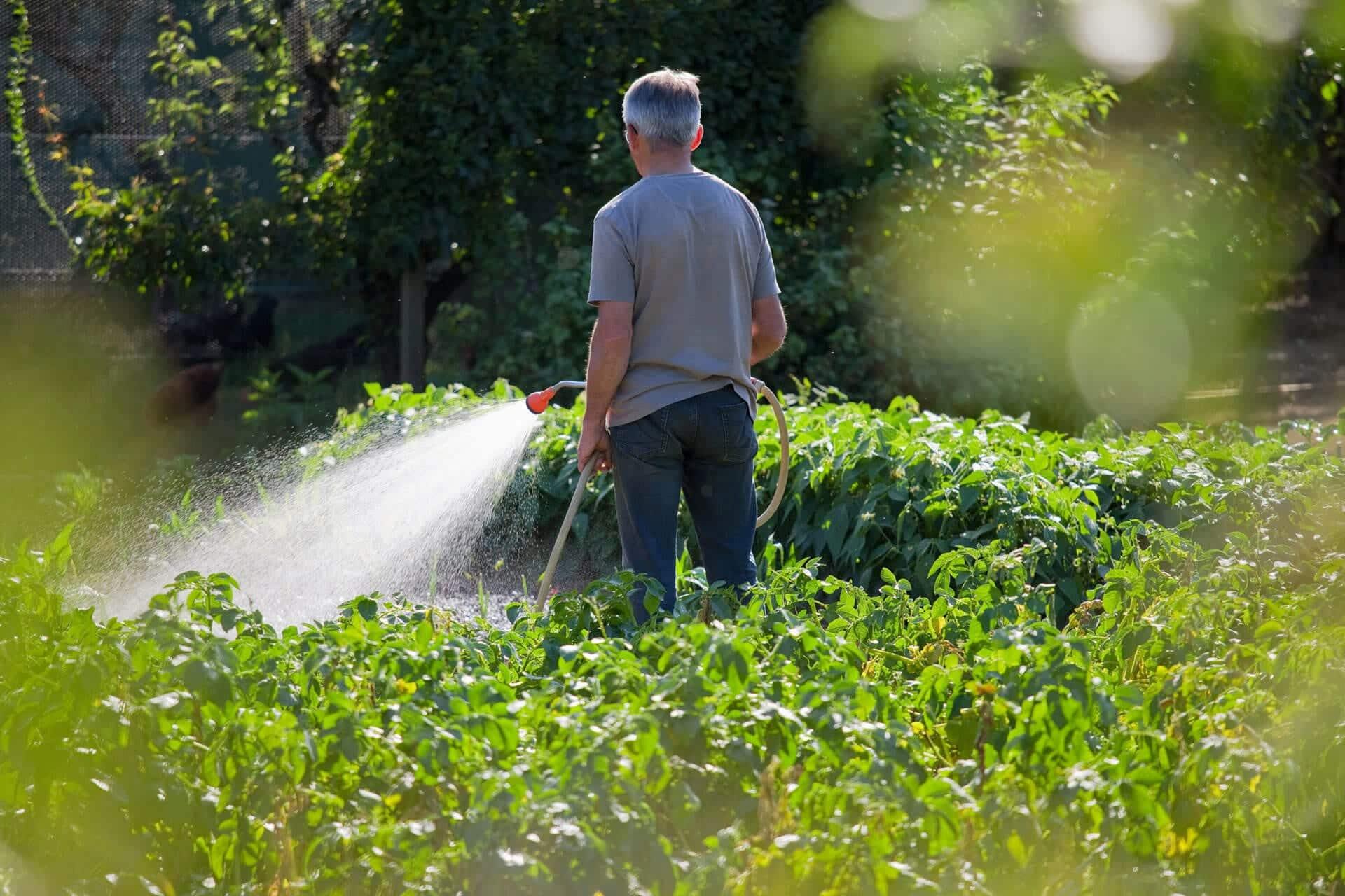 Bewässerung – aber wie?