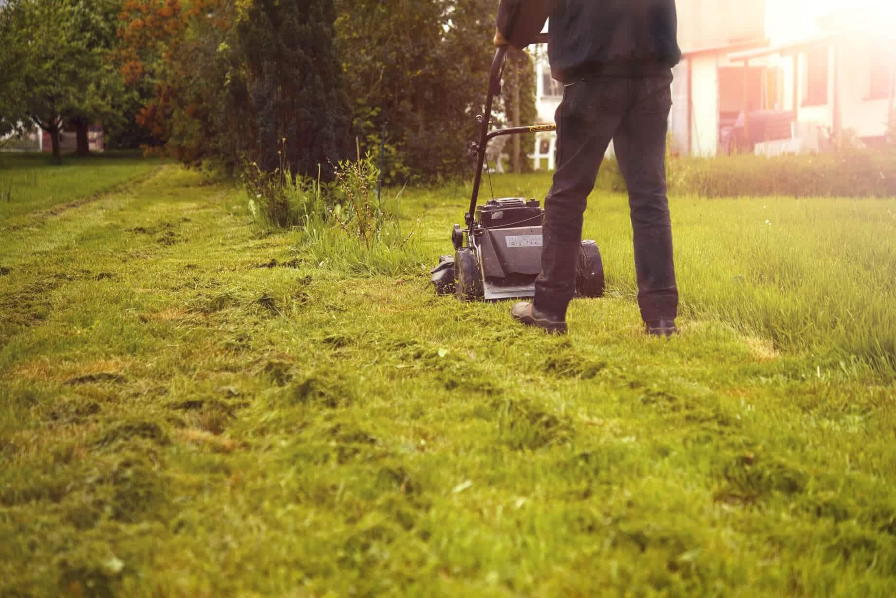 Rasen mähen oder Rasen mulchen? Unsere Tipps.